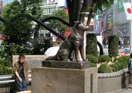 Hachiko square, Shibuya. Poor dog, his boss never came...